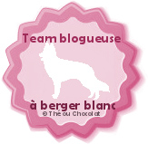team blogueuse à berger blanc des pyrennées