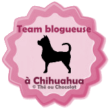 Team blogueuse à chien chihuahua versus team blogueuse à chat