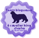 team blogueuse à cavalier king charles