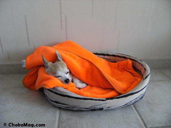 couverture polaire orange ultra douce et bonne qualité ezoo pour chiens
