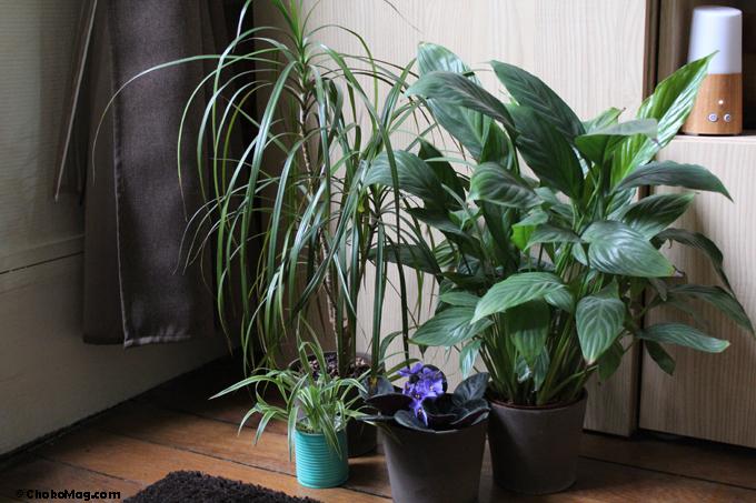La campagne la ville plantes d polluantes et fleurs for Plantes interieures