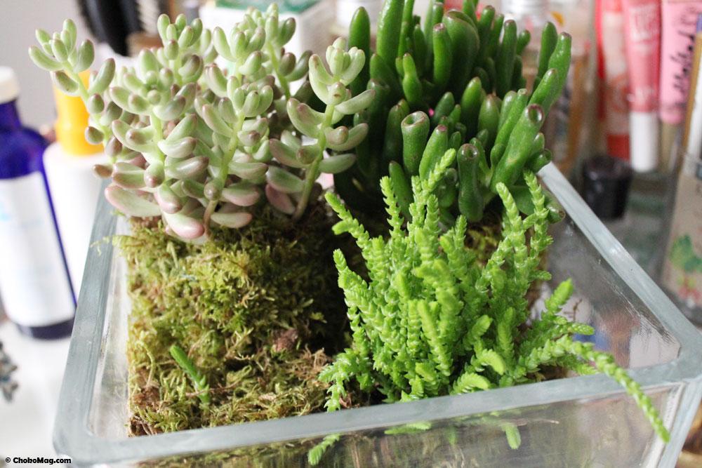 diy terrarium ouvert dtourner des bocaux en terrarium ikea hack livre mes terrariums deco. Black Bedroom Furniture Sets. Home Design Ideas