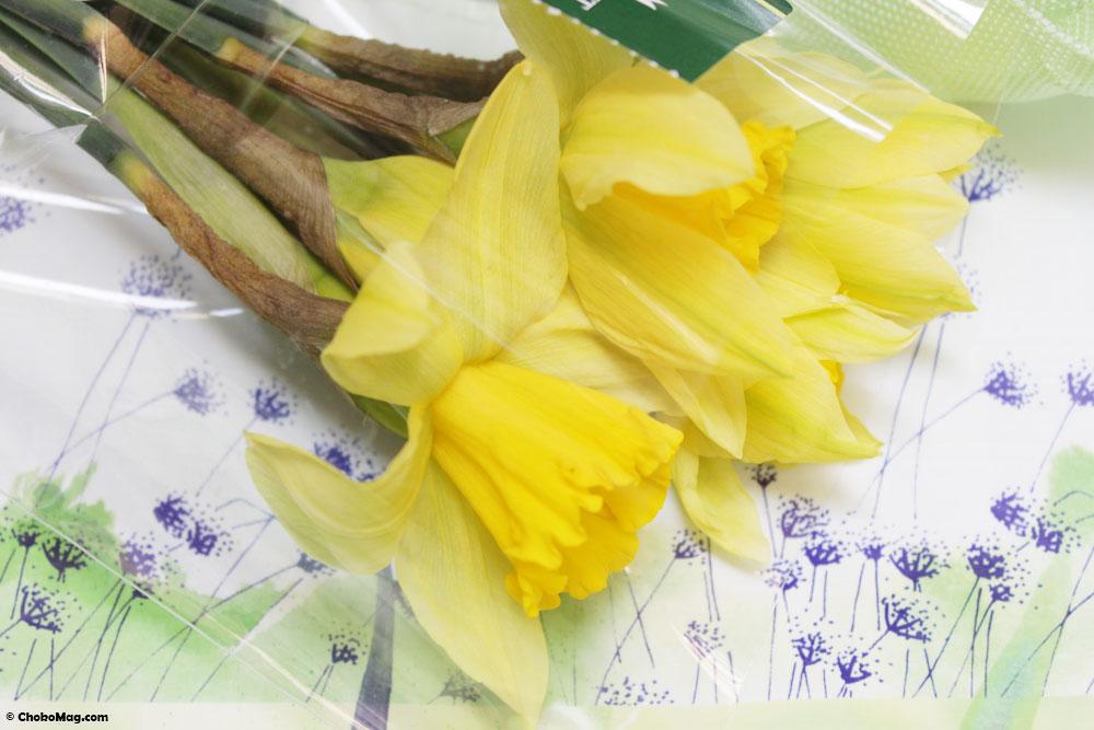 bouquet une jonquille pour cury